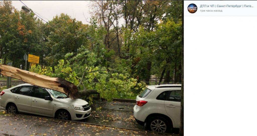 Ветер повалил более 60 деревьев в Петербурге